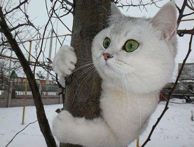 как снять кошку с дерева